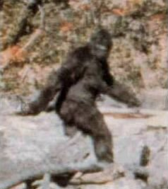 Frame 352 from 1967 Patterson–Gimlin film, alleged by some to show a Bigfoot, and by others to show a man in a gorilla suit