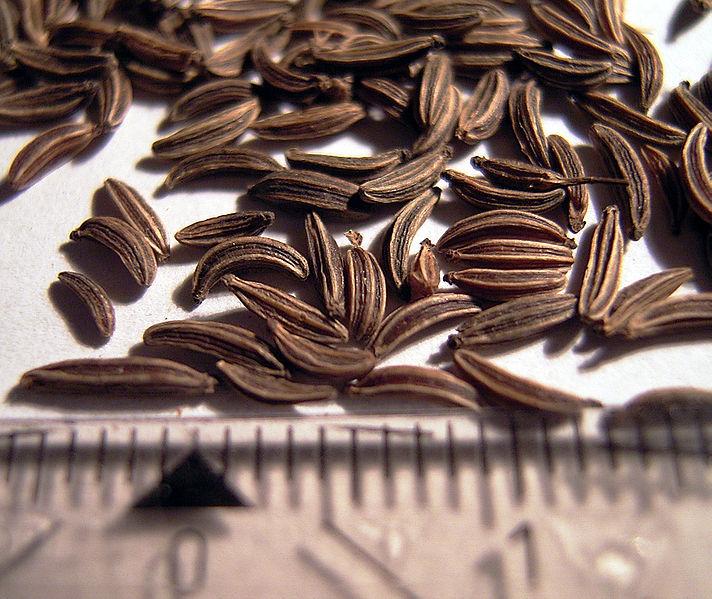 Seminţe de chimen