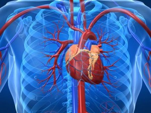 Afectiunile-cardiovasculare-300x225